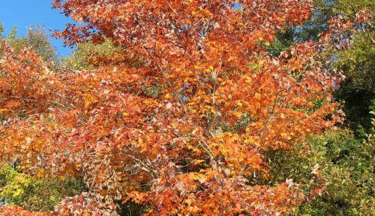 Paysage d'automne au chalet Movendo