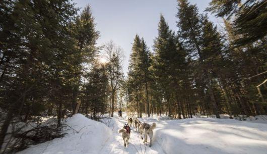 Traîneau à chien - Au Chalet en Bois Rond