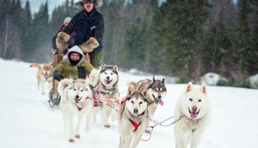 Traineau à chien - Chalet Aurore Boréale